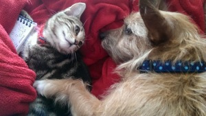 Scrappy and Gizmo having a cuddle